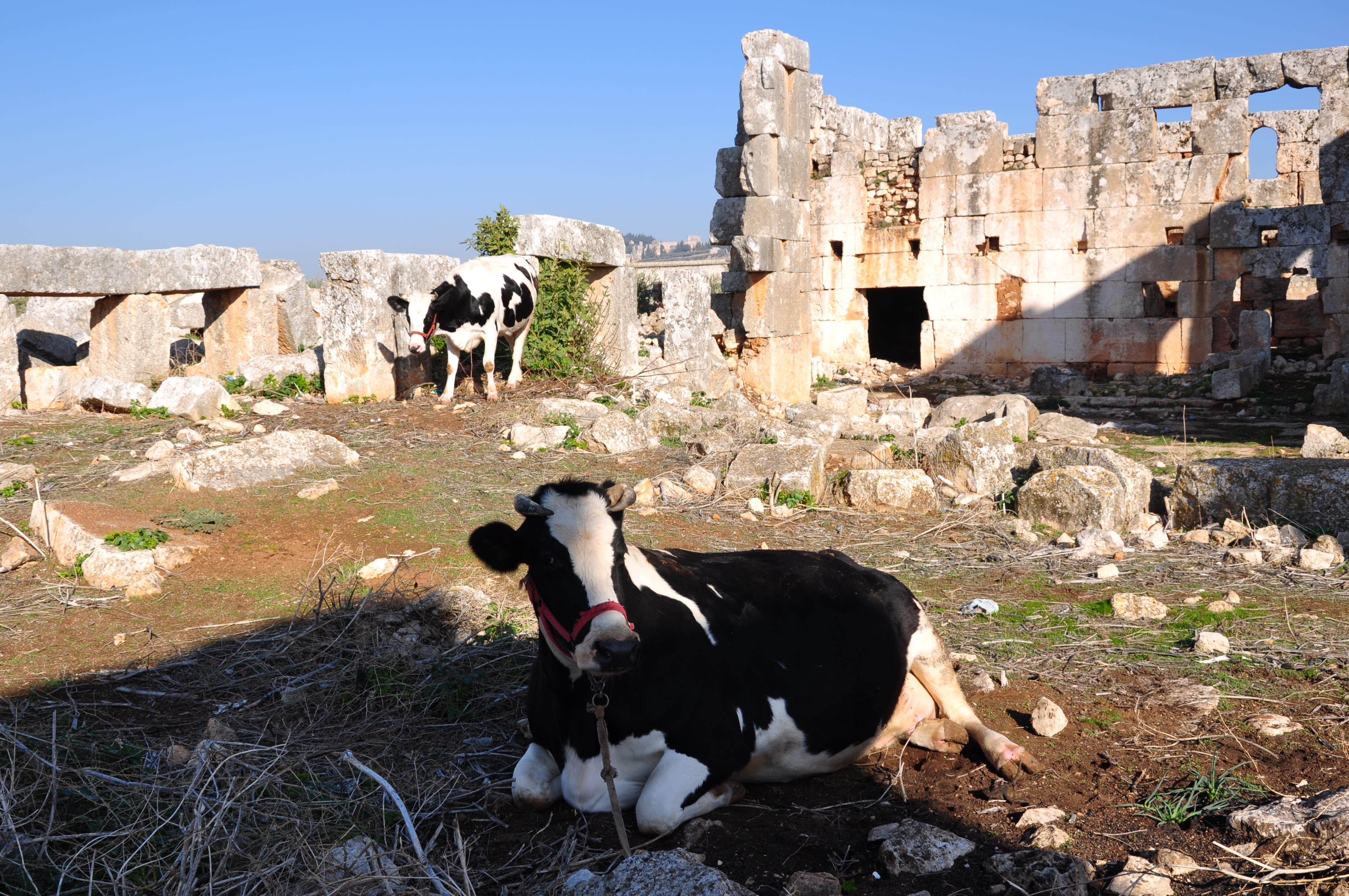 Luca Errera, Daniela Trastulli, Siria, città morte, Ancient Villages, Northern Syria
