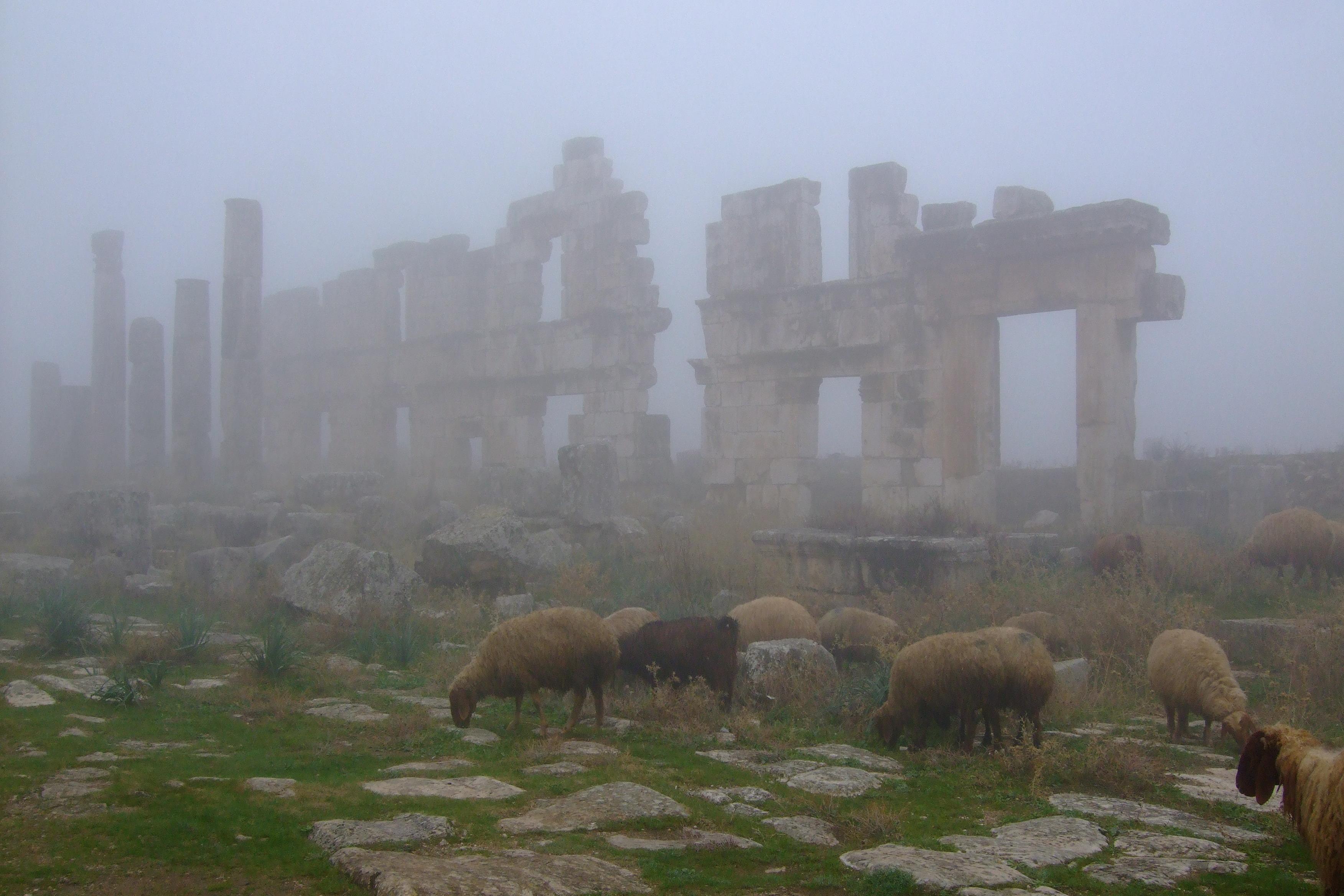 Luca Errera, Daniela Trastulli, Siria, Afamia, Apamea