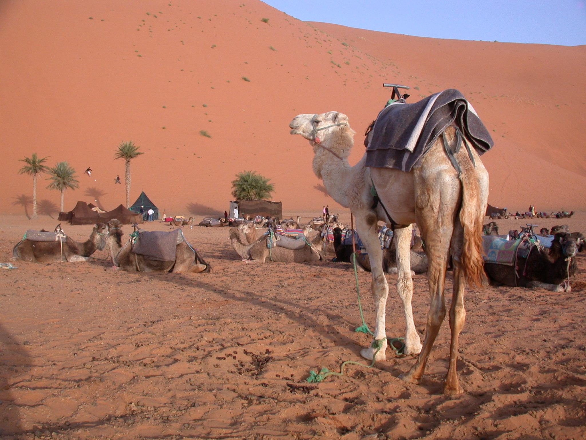 Luca Errera, Daniela Trastulli, Marocco, deserto, dromedario