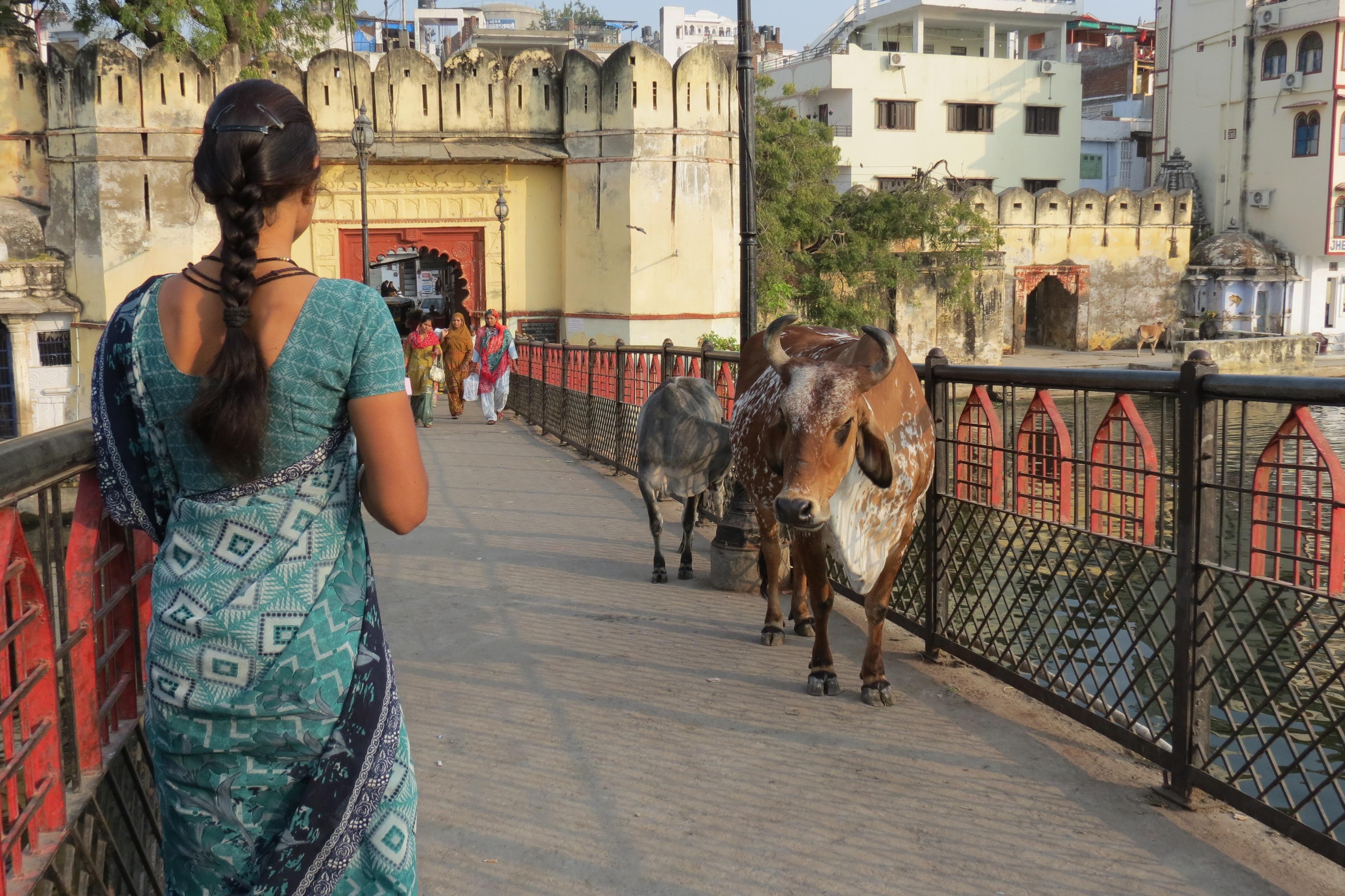 Luca Errera, Daniela Trastulli, India, Rajasthan, Udaipur, donna, vacca
