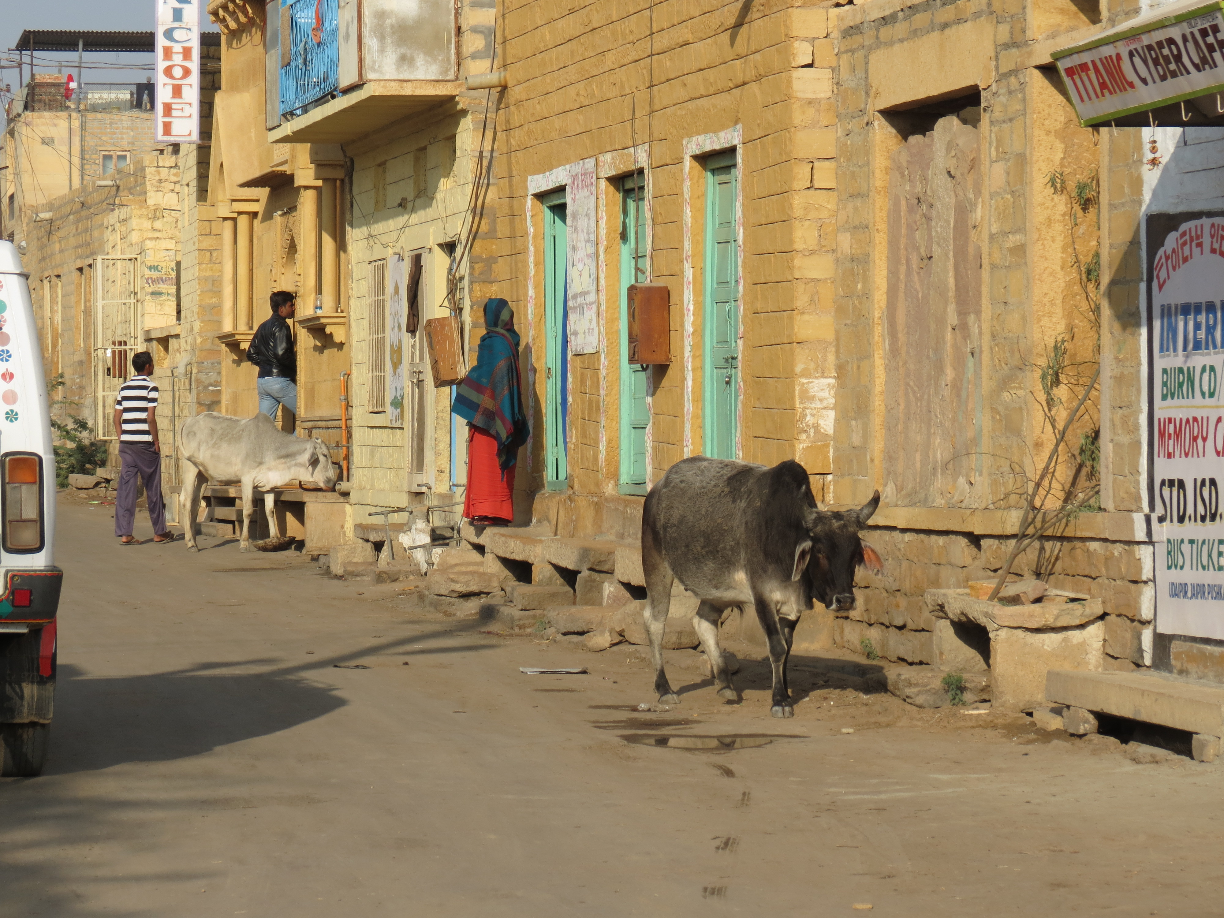Luca Errera, Daniela Trastulli, India, Rajasthan, Jaisalmer, donna, vacca